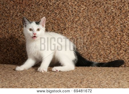 White Kitten With Gray Spots And Meows Sitting On  Sofa