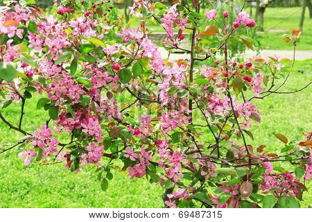 Beautiful spring blossom, outdoors