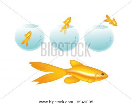Golden Fish In Bottle