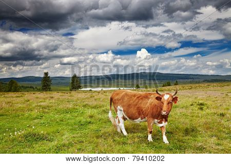 Mountain landscape with grazing cow
