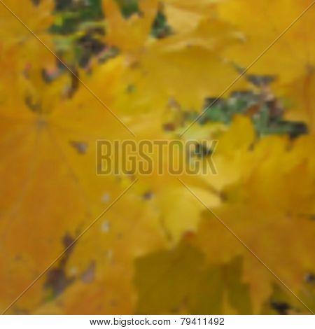 Autumn maple blurred photo background