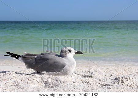 Seagull Resting On Florida Beach By Ocean