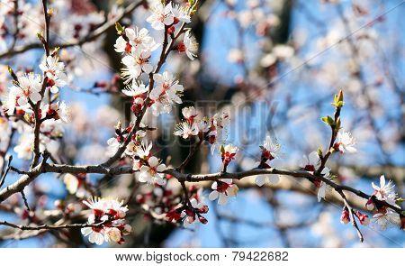 Spring Blooming Flowers