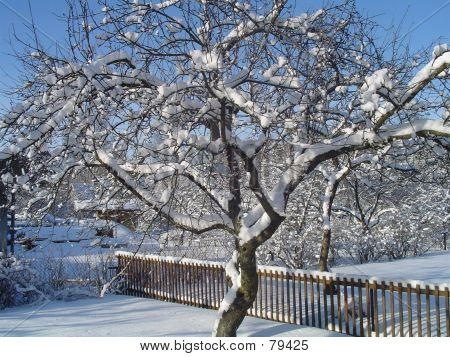 Winter In My Garden