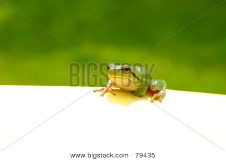 Green Frog Note