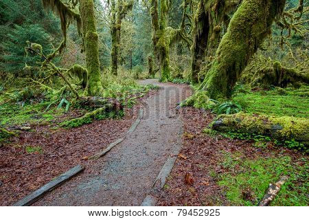 walking trail in Olympic national park