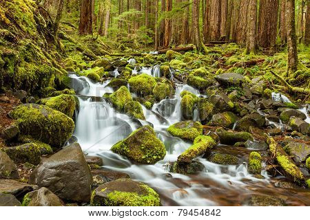 Cascade Waterfall In Olympic National Park