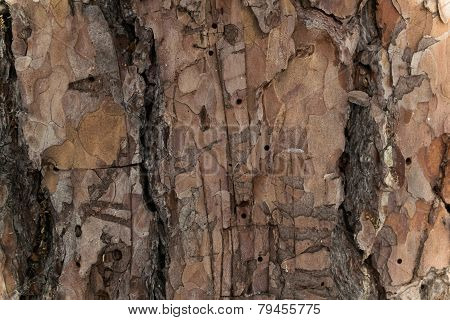 The Background Wood