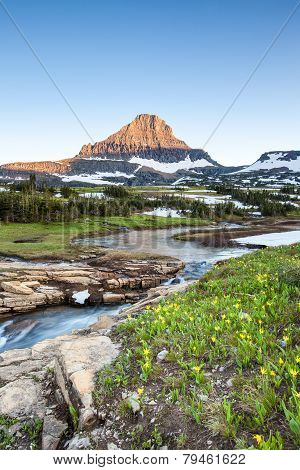 Wildflower Meadow At Logan Pass, Glacier National Park, Mt