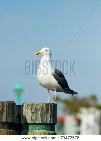 Seagull at a port