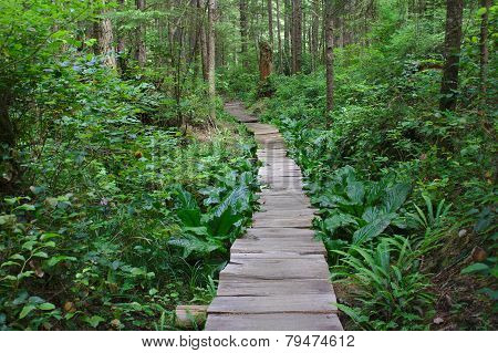 Cedar path through the Rainforest