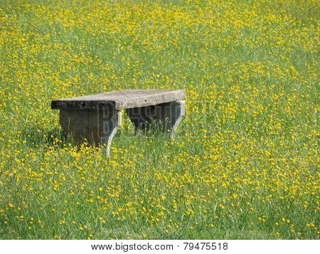 The Buttercup Bench