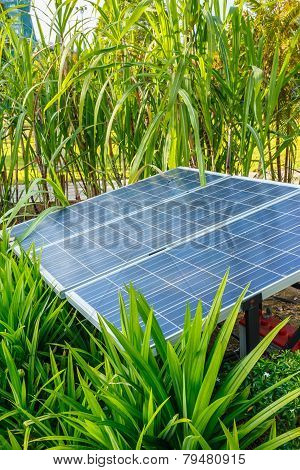 The Panels Of Solar Cell In A Garden.