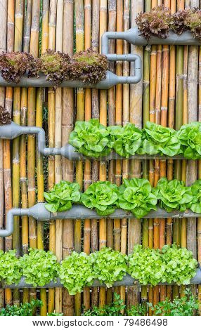 Hydroponic Vertical Gardening