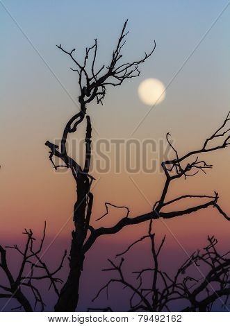 Leafless Branch At Sunset