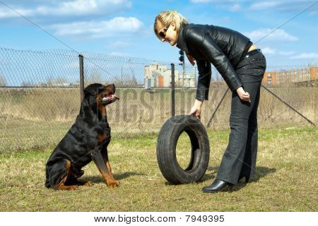 Blonde Young Woman With Rottweiler And Tire On A Training.