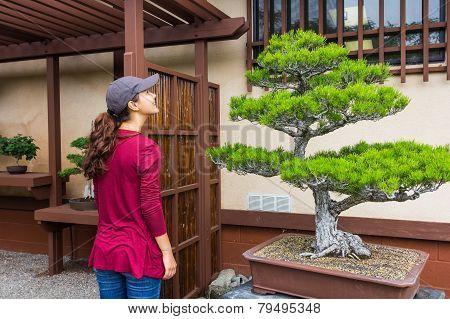 Woman And Bonsai