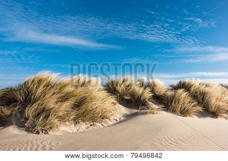 Dune On The Baltic Sea