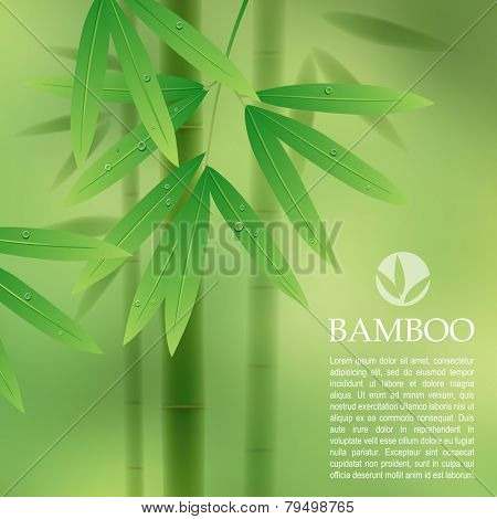 Green background with bamboo stems and leaves. Vector illustration