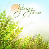 picture of saraswati  - Spring season greeting card design with green plants on shiny background - JPG