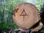 picture of appalachian  - Symbol of the Appalachian Trail carved by a chainsaw into a tree that was cleared from the trail - JPG