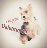 image of begging dog  - Happy st valentine dog begging pardon postcard - JPG