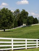 White Wood Fence and Meadow