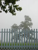 Picket fence and Tree in Fog
