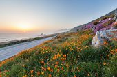 picture of wild west  - wild flowers and California coast in Big Sur - JPG