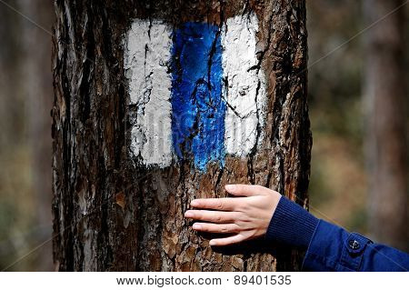 Hand On A Tree Bark Showing A Hiking Sign