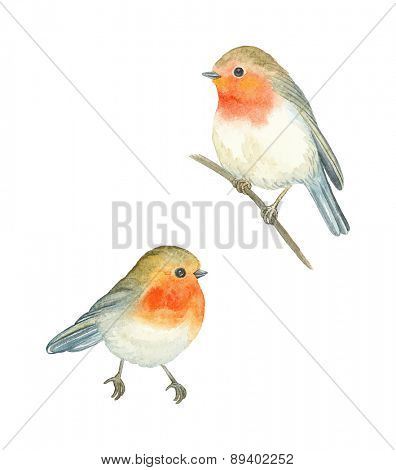 Watercolor birds Robin (Erithacus rubecula), vector illustration.