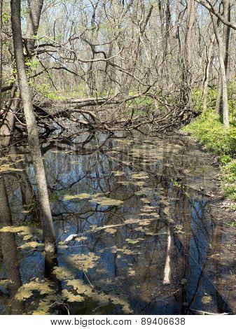 Spring Swamp