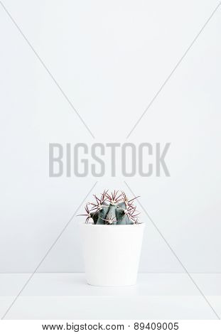 Cactus In A White Pot And A Wall With Place For Text