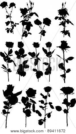 illustration with black rose flowers isolated on white background