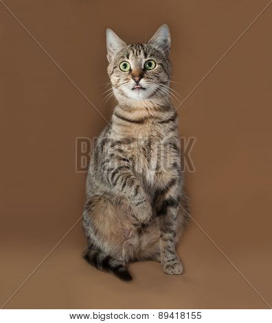 Tabby Cat With Green Eyes Sitting On Brown