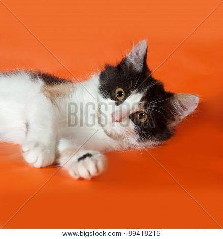 Tricolor Fluffy Kitten Lying On Orange
