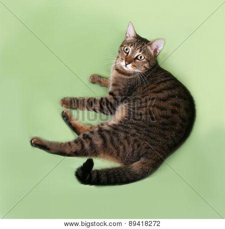 Tabby Cat Lying On Green