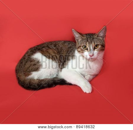 Tricolor Striped Cat Lies On Orange