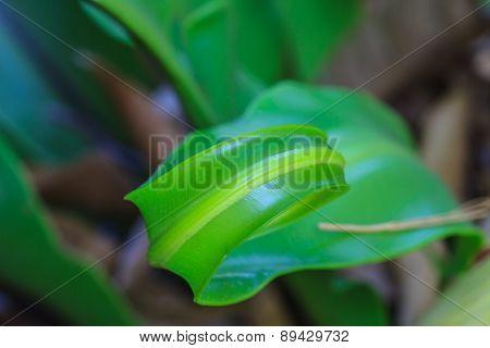 Green Fern Origin To In The Nature