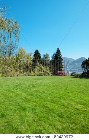 green lawn and trees in a peaceful park, outdoors