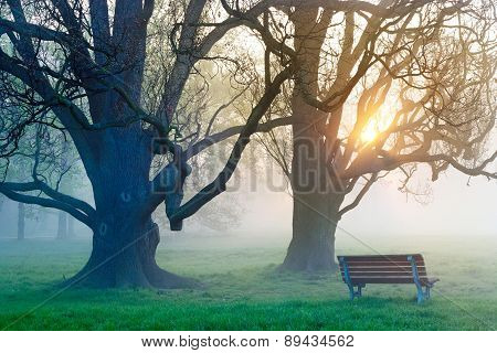 místy morning in the spring in park