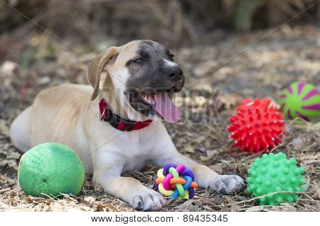 Cute Puppy Dog And Toys