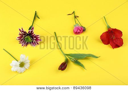 Different flowers on yellow background