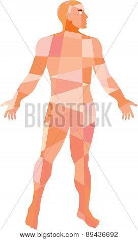 Gross Anatomy Male Isolated Low Polygon