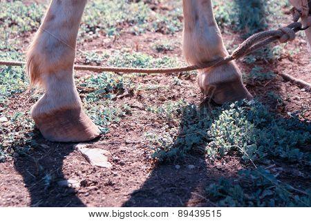 Horse hoofs a