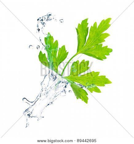 Green leaves in water splashes isolated on white