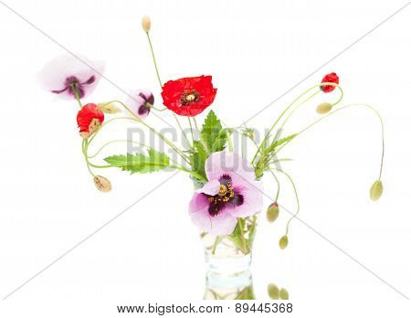 Red And Pink Poppies