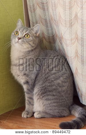 gray tabby cat sitting on a window sill and looking up