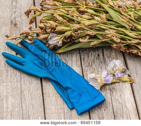 Faded Irises