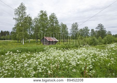 Meadow and barn in Northern area.